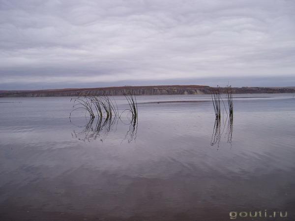 Корабли-листья уносит вода.