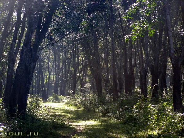 Индийские джунгли.